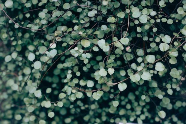 plant-690078_960_720